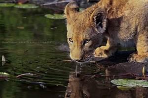 Okavango14  The First
