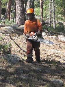 Drought Helps Pine Beetles Hide | SDPB Radio