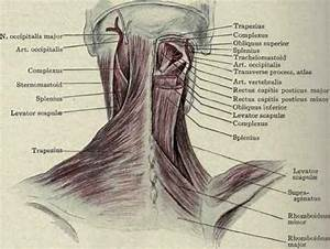 Neck Muscles Before And After