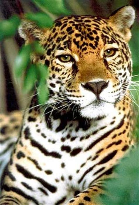 amazing jaguar habitat 7 amazing birds and animals of the tropical rainforest