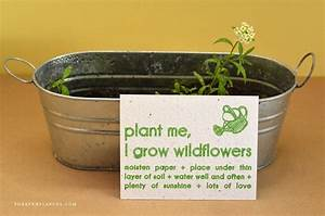 How To Plant Your Seeded Paper Invitations  How To