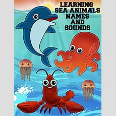 Watch 'learning Sea Animals Names And Sounds' On Amazon Prime Instant Video Uk Newonamzprimeuk
