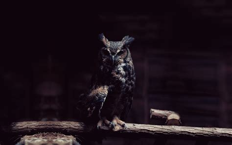 Hd Owl Wallpapers owl wallpaper hd world s greatest site animals