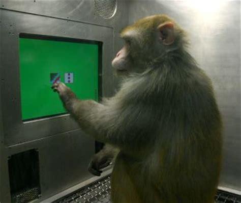 monkey behavior animal pictures  facts factzoocom