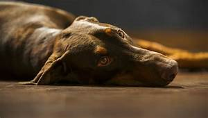 Brain Tumors In Dogs: Symptoms, Causes, & Treatments - Dogtime