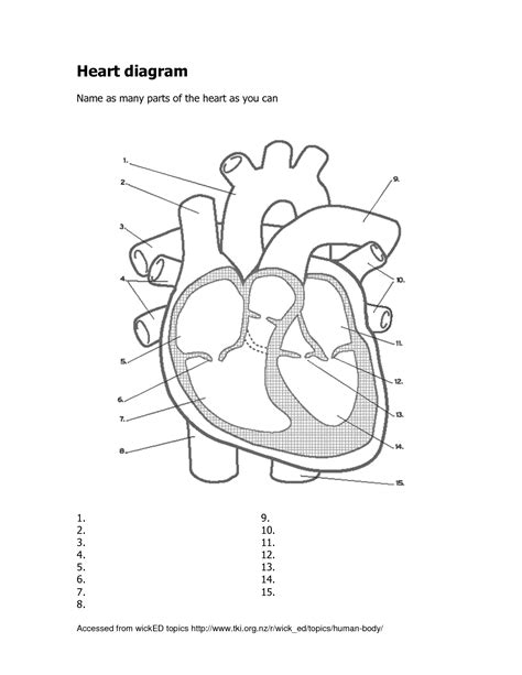 Heart Diagram Blank Worksheet  World Of Diagrams
