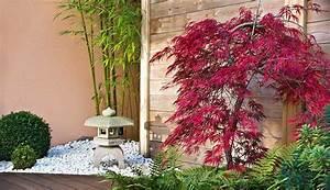 Bambou Pour Haie Brise Vue : prix et plantation d 39 une haie de bambous ~ Premium-room.com Idées de Décoration