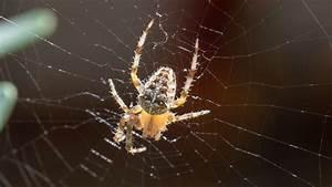 Spinnen Fernhalten Wohnung : darum sollten sie spinnen zu hause nicht t ten wohnen ~ Whattoseeinmadrid.com Haus und Dekorationen
