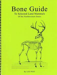 Bone Guide To Selected Land Mammals Of The Northwestern