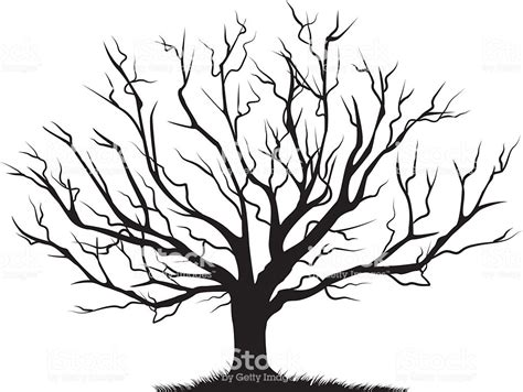 Deciduous Bare Tree Empty Branches Black Silhouette Stock