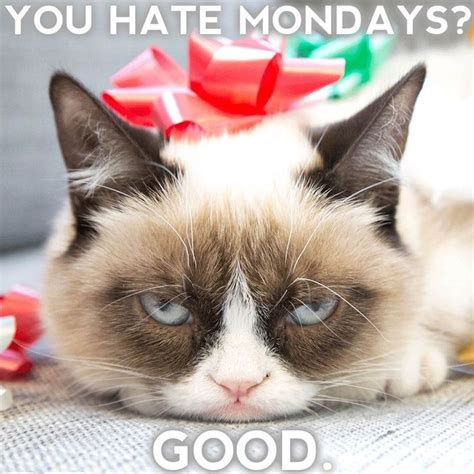 1000+ Images About Rude Cat On Pinterest  Grumpy Cat