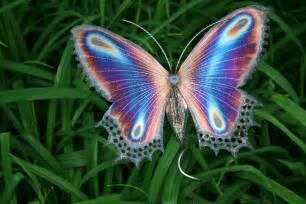 コスタリカ:The color PURPLE — butterflies ...