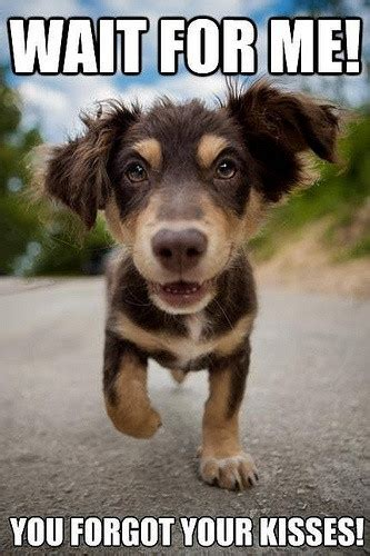 Kiss Me Dog Meme - top 79 funny and cute puppies memes funny dogs pinterest memes dog and animal