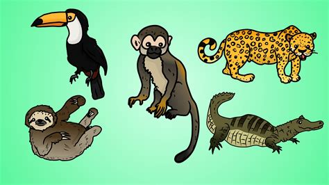 draw    draw jungle animals youtube