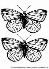 Butterfly Printable Pages Colouring Coloring Butterflies Print Sheets Intheplayroom Template Templates Pdf Drawing Paper Wings Pom Different sketch template
