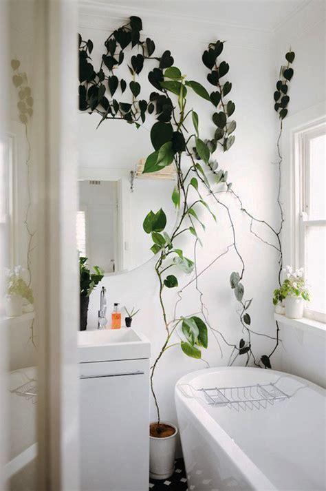 indoor climber plants    choice