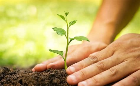 Planting Trees On World Environment Day  Importance Of
