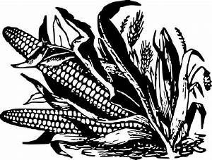 Corn Images Black And White | www.imgkid.com - The Image ...