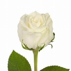 White Premium Roses | Premium Wholesale Flowers | Free ...