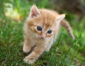 orange tabby cat names 204 best kittens cats images on adorable