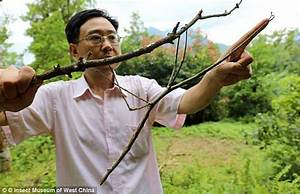 World's largest mosquito is caught in China | Daily Mail ...