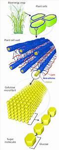 Lignocellulose  The Most Abundant Organic Substance On