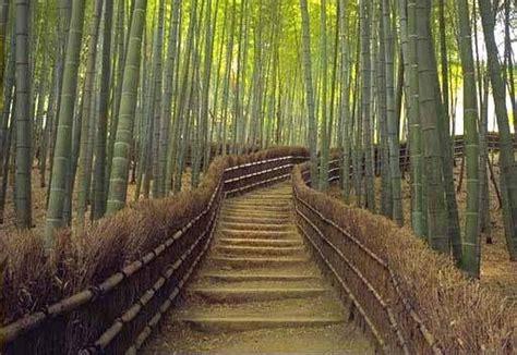 ideas  bamboo garden fences  pinterest