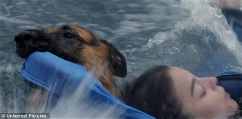dog forced  swim  water   dogs purpose film set