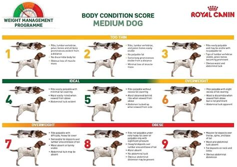 dog foods  weight loss  overweight pups