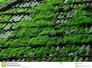 Moos Entfernen Dach : moos vom dach entfernen dachreinigung dachziegel reinigen beton pflaster reinigen garten ~ Orissabook.com Haus und Dekorationen