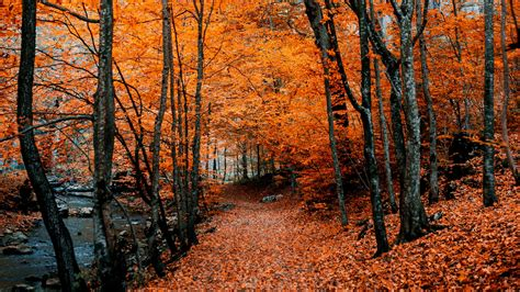 Download wallpaper 3840x2160 autumn, path, foliage, forest ...