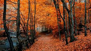 Download, Wallpaper, 3840x2160, Autumn, Path, Foliage, Forest
