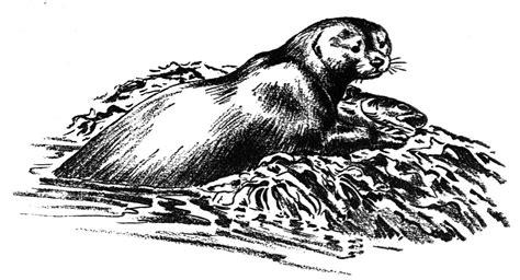 21 Best Otter Coloring Pages Gekimoe 99593