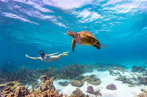 coole aktivitaeten  ningaloo reef tourism australia
