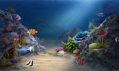 3d Wallpaper Live Hd by Free 3d Hd Live Fish Wallpaper Apk For Android