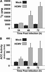 Impact Of Hcmv Infection On Fatty Acid Biosynthesis And