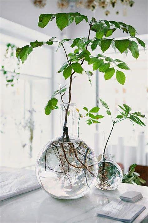 astuce d 233 co la magie d une branche d arbre