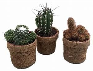 Pot A Cactus : kokodama cactus mixed 100 fair trade florastore ~ Farleysfitness.com Idées de Décoration
