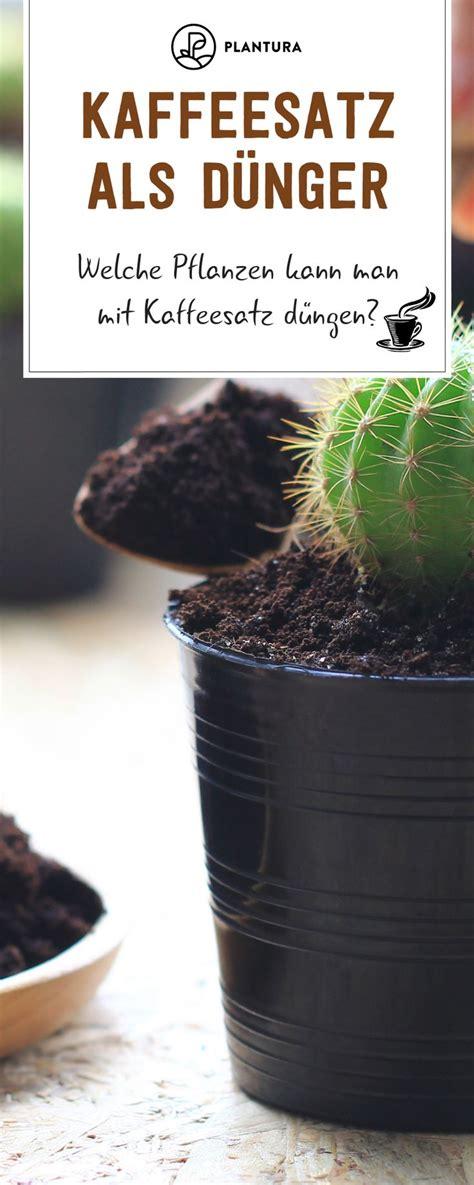 kaffeesatz als blumendünger für zimmerpflanzen kaffeesatz als d 252 nger verwendung vorteile des