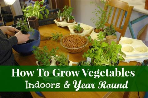 How To Grow Vegetables Indoors Year Round