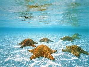 Fond Ecran Mer : fond ecran etoile de mer 1101 wallpaper gratuit ~ Farleysfitness.com Idées de Décoration