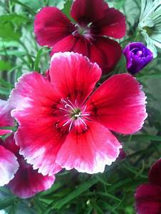 Natural Beauty Of Flowers