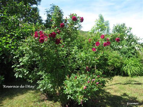 bureau de poste l hay les roses 39 roseraie de l 39 hay 39 une au parfum somptueux obtenue