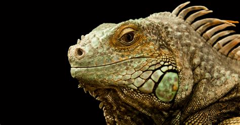 Exotic Lizards - From Unusual To Downright Weird - Epic ...