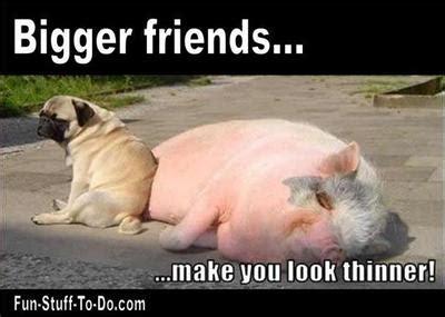 Funny Dog Pictures And Jokes Ktawa Com Ayo Ketawa