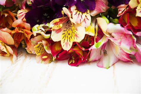 alstroemeria flower meaning flower meaning
