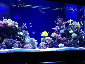 Optimale Aquarium Temperatur : how to keep your saltwater aquarium from overheating ~ Yasmunasinghe.com Haus und Dekorationen