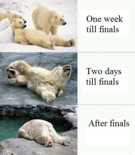 Finals Week Meme - college memes final exams edition guest starring effie trinket the rock polar bears pawn