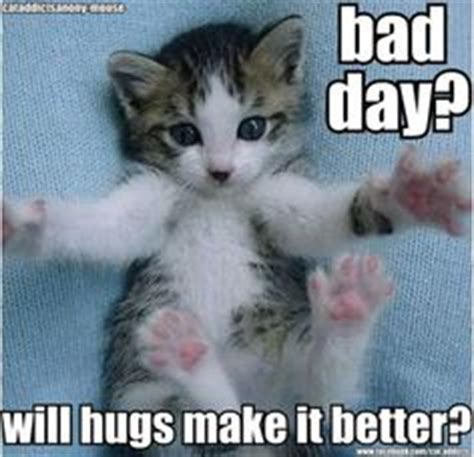 Cat Hug Meme - 1000 images about sympathy memes on pinterest native american prayers its okay and kiss