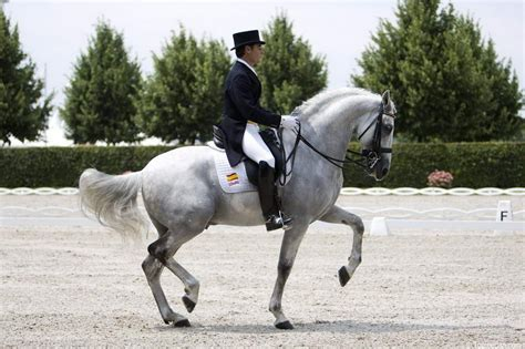 horses dressage horse andalusian pretty fuego spanish breed pure breeds xii cowboy piaffe dance arabian